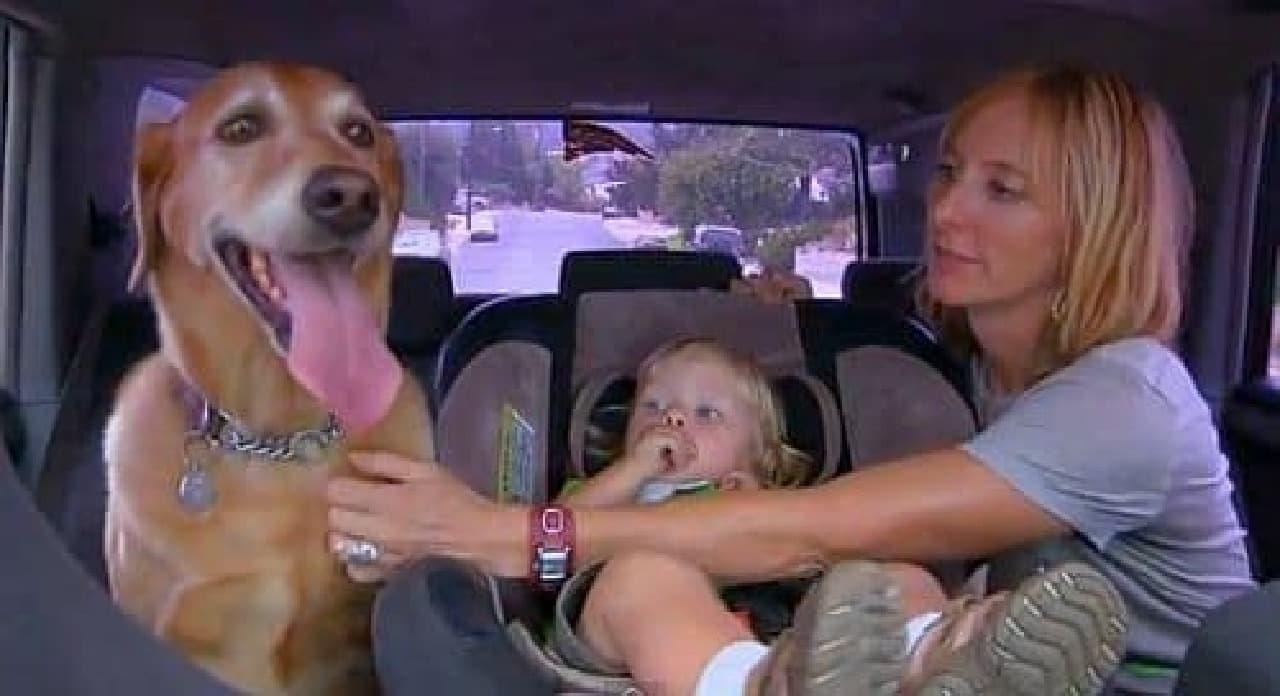DOGTV による犬向けのテレビ番組のひとコマ