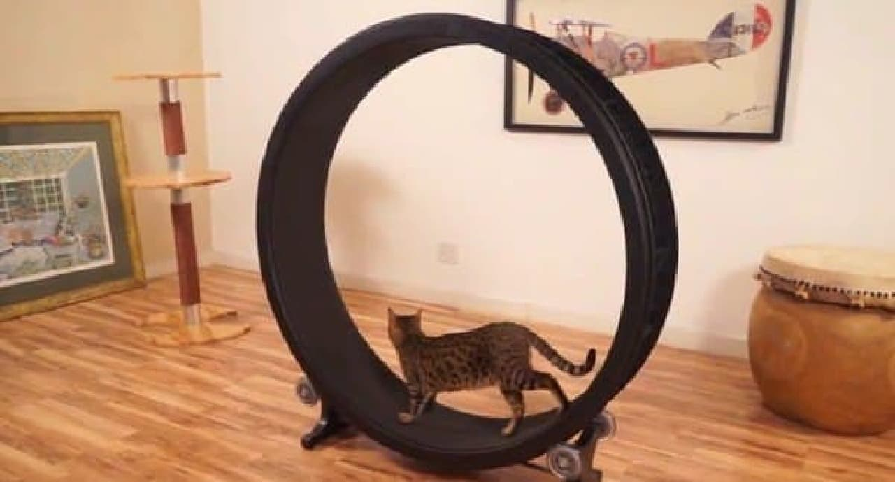 「Cat Exercise Wheel」の仕組み
