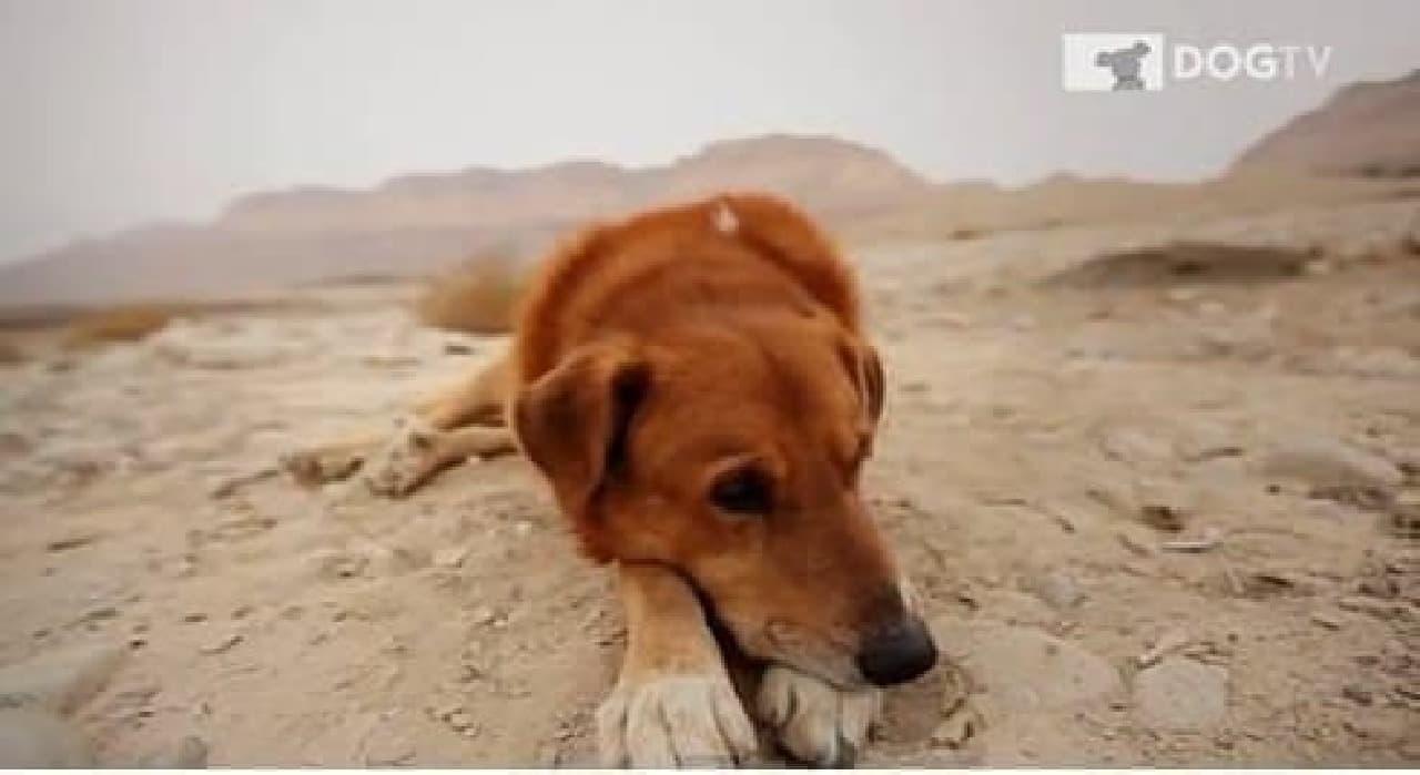 DOGTV 「リラクゼーションチャンネル」のひとコマ