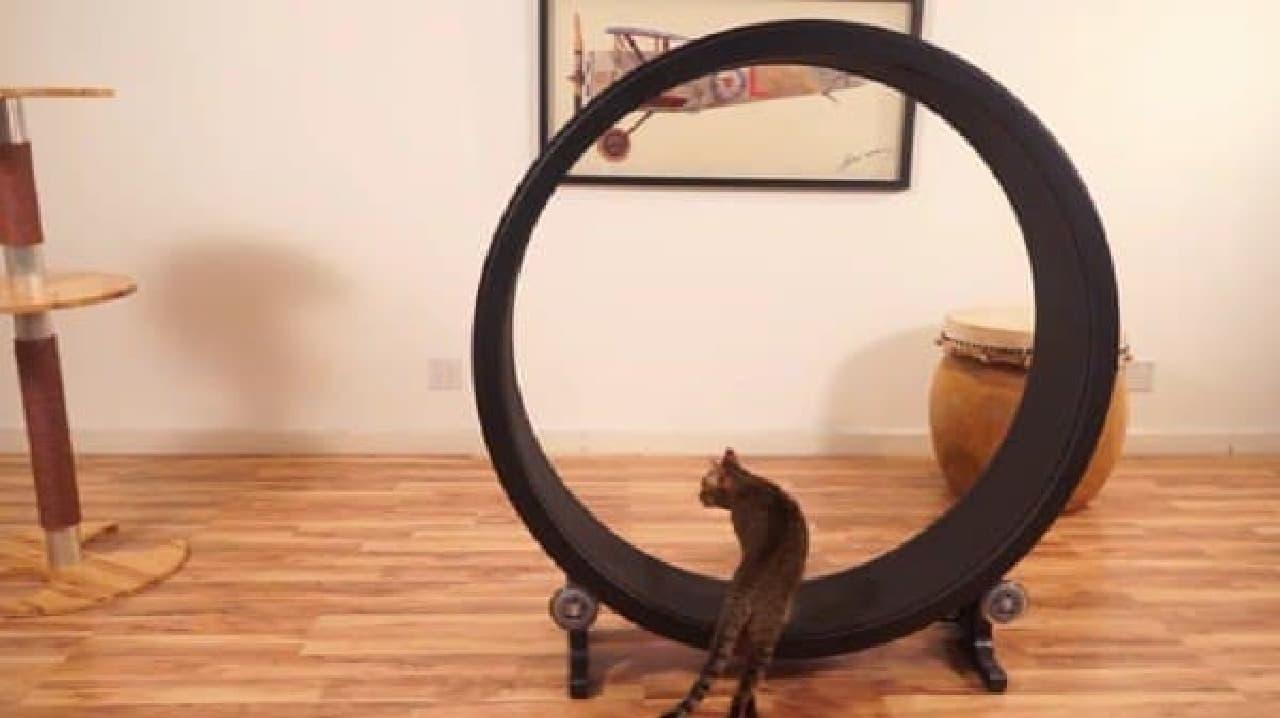「Cat Exercise Wheel」は、ネコだけで遊べるマシン