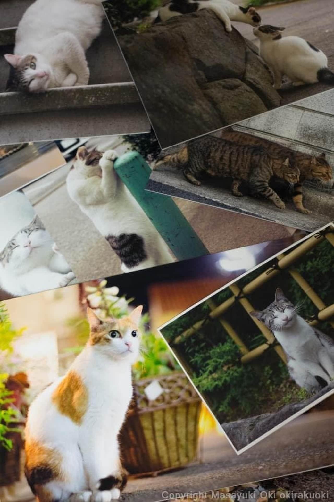 ネコイベント「ねこ専」で販売される沖昌之さんのパネル例