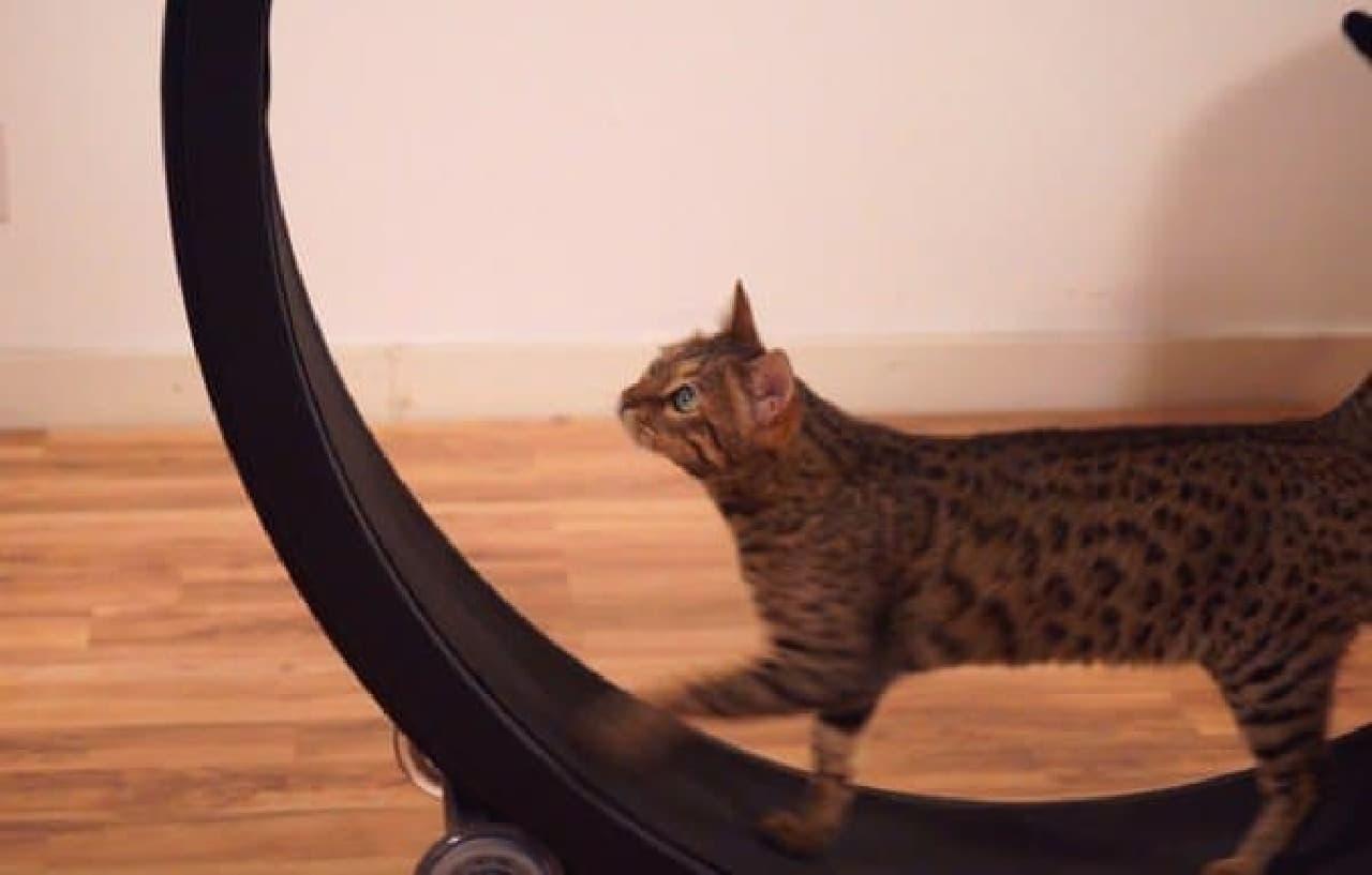 ネコ専用ルームランナー「Cat Exercise Wheel」