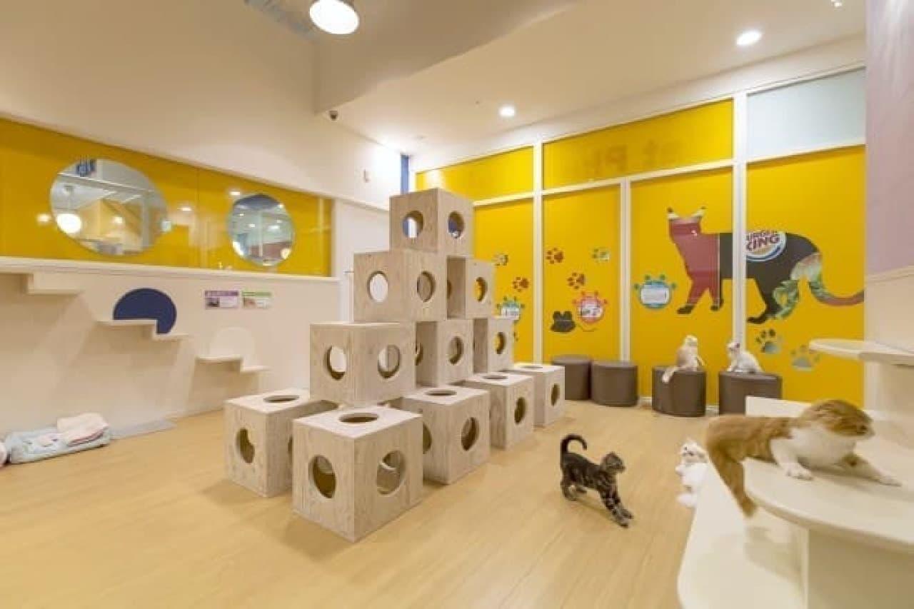 大京リフォーム・デザインとペットショップ「ペットプラス」のコラボショールーム