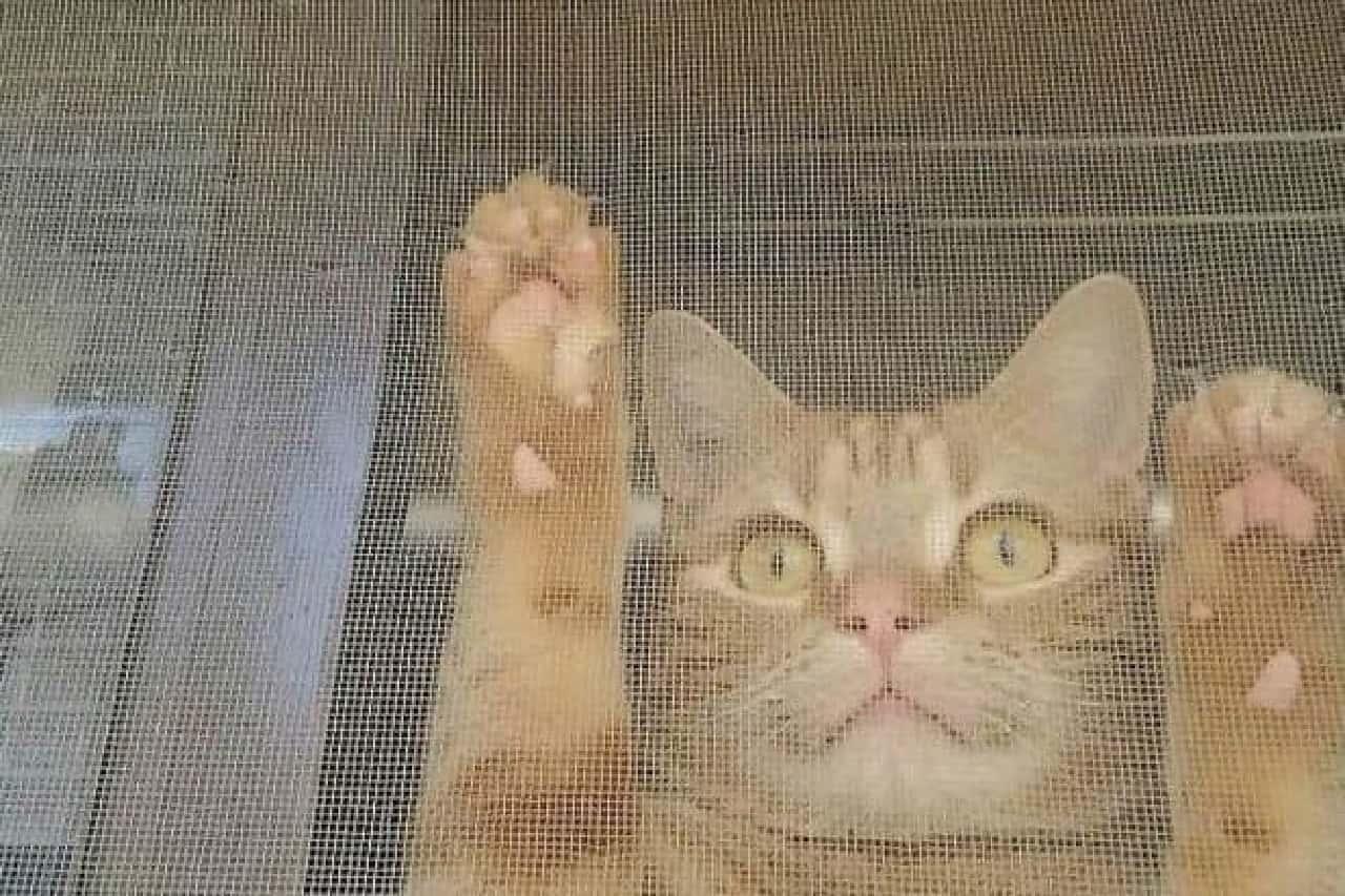 穴あき網戸をネコがふさぐ「影ニャーシート」