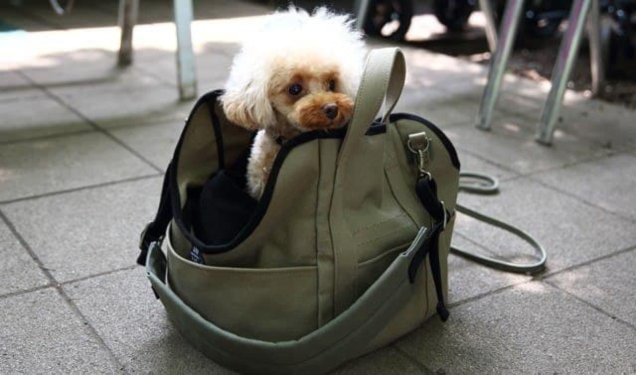 「ハウストートバッグ」は自立タイプ