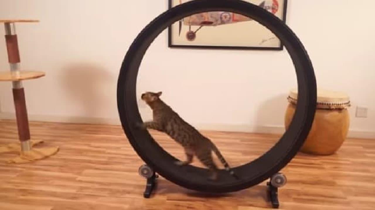 「Cat Exercise Wheel」はネコだけで遊べるマシン