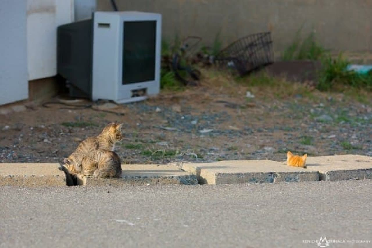 猫写真家森永さん作品例