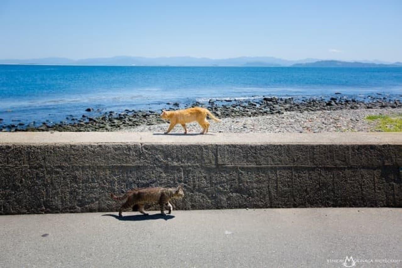 森永健一さんの写真集「あきらめニャければうまくいく」 高速道路ネコ