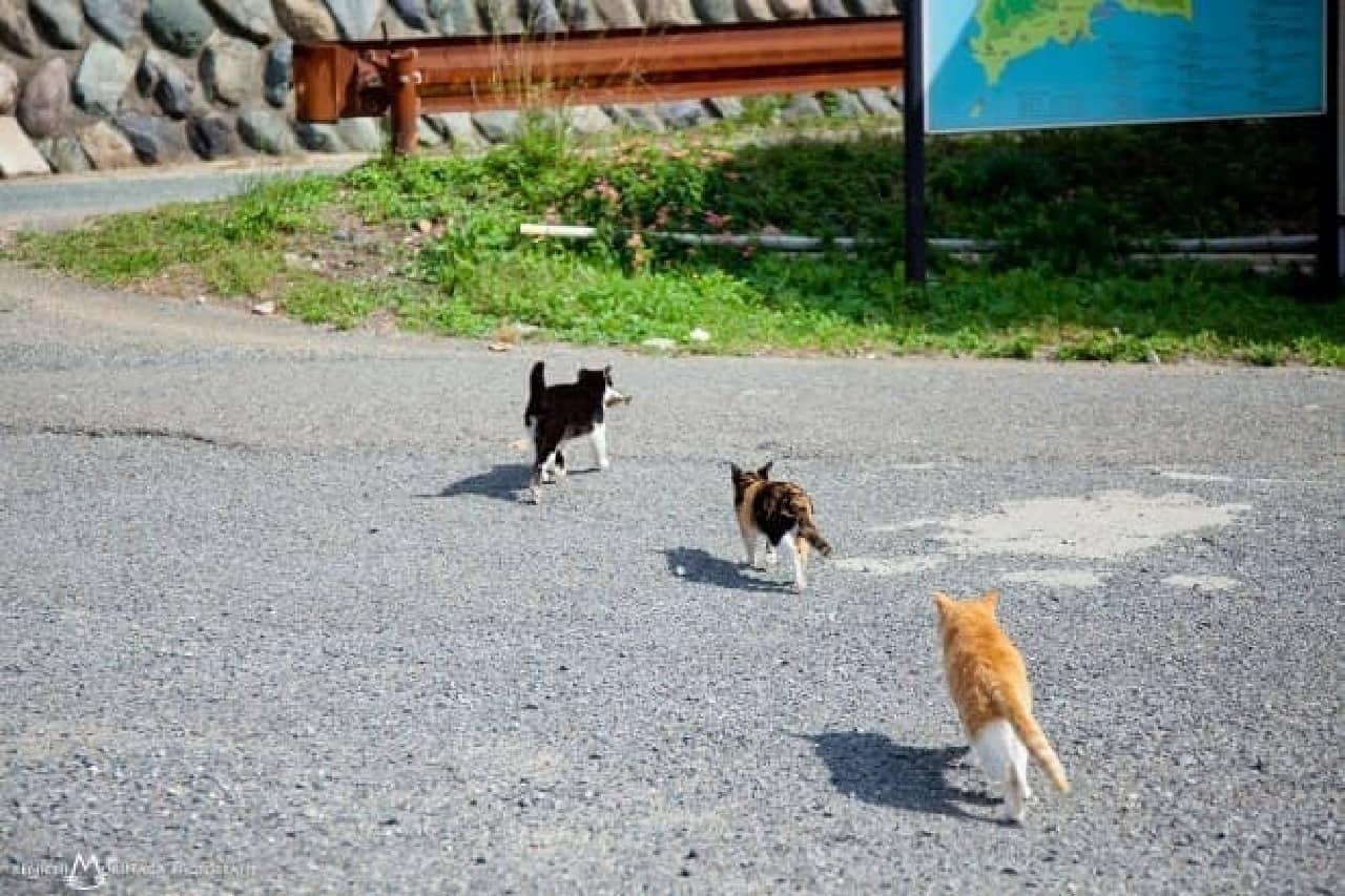森永さんのネコ写真例