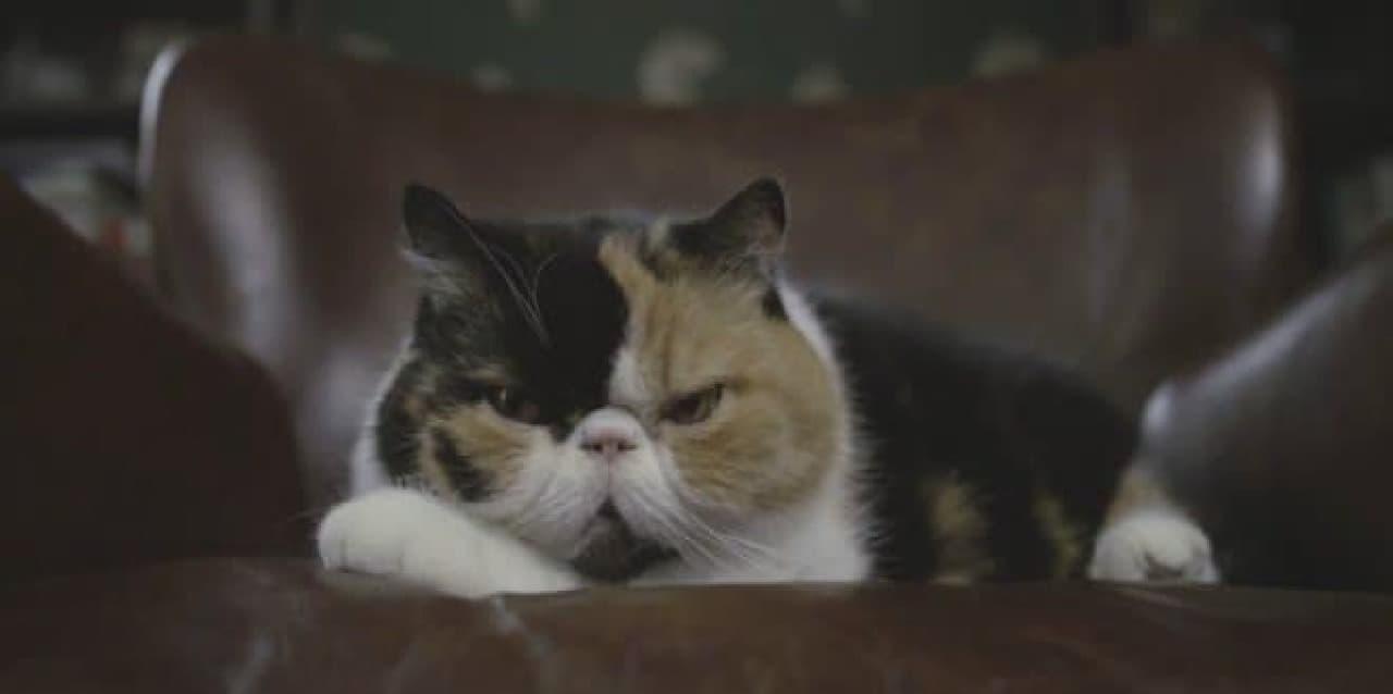 「KITTYO」ユースケース