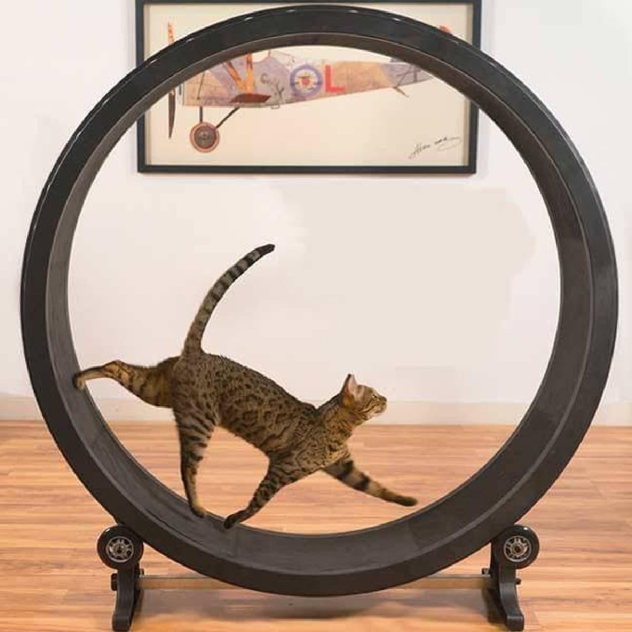 ネコ専用ルームランナー「Cat Exercise Wheel」利用例