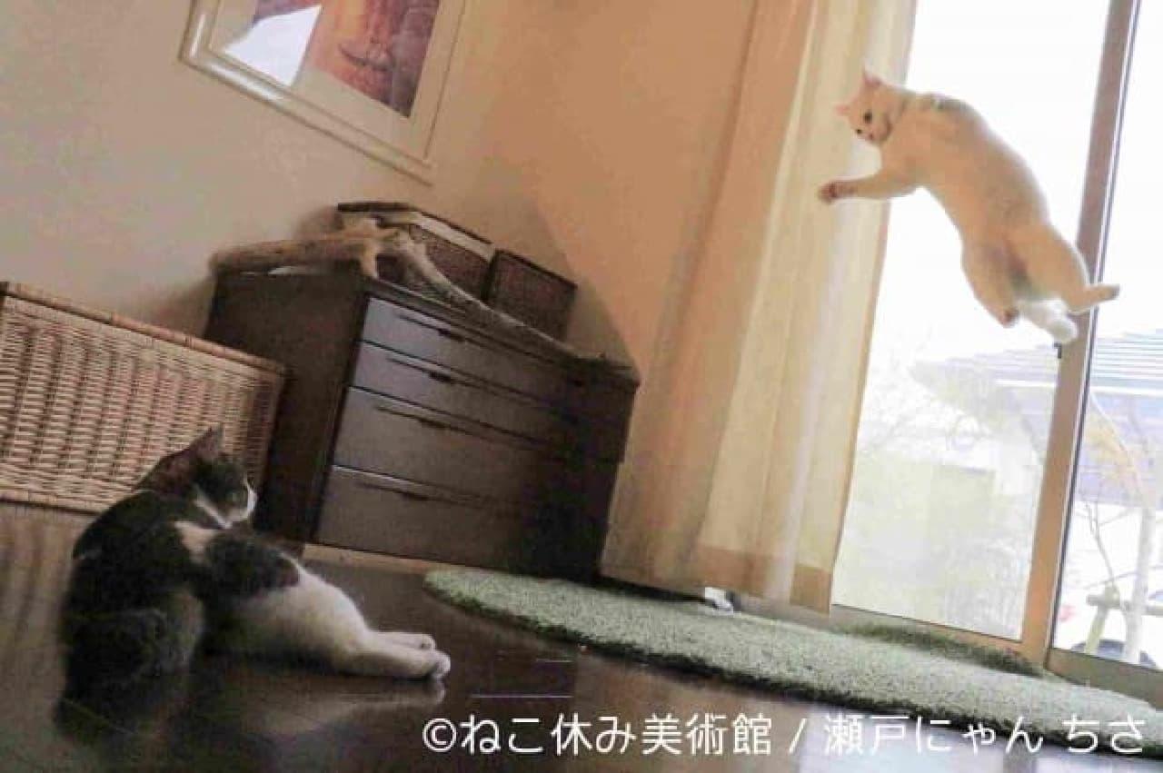 ネコと名画がコラボした「ねこ休み美術館」