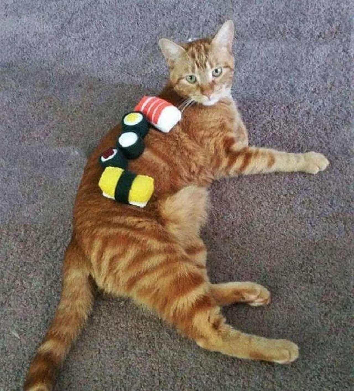キャットニップを染み込ませたネコのおもちゃ「Sushi」