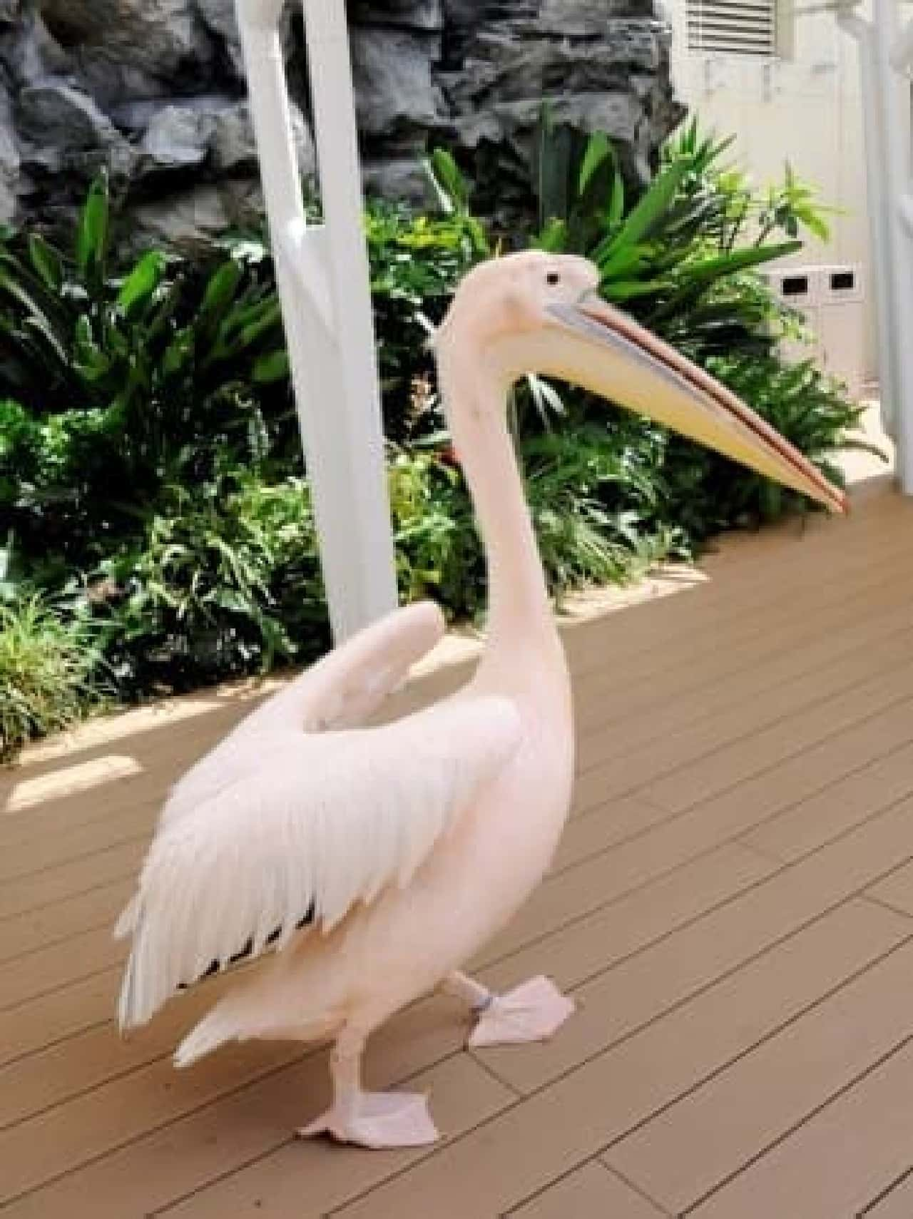 池袋「サンシャイン水族館」