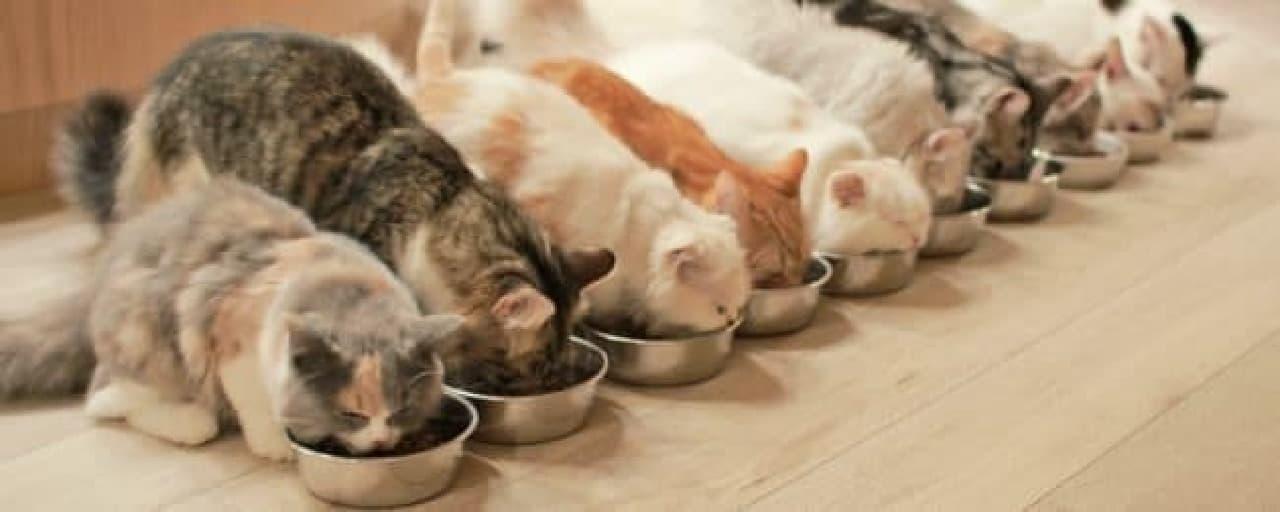 肉球マシュマロの「やわはだ」と「猫カフェMoCHA」がコラボした「Mochaマシュマロ」