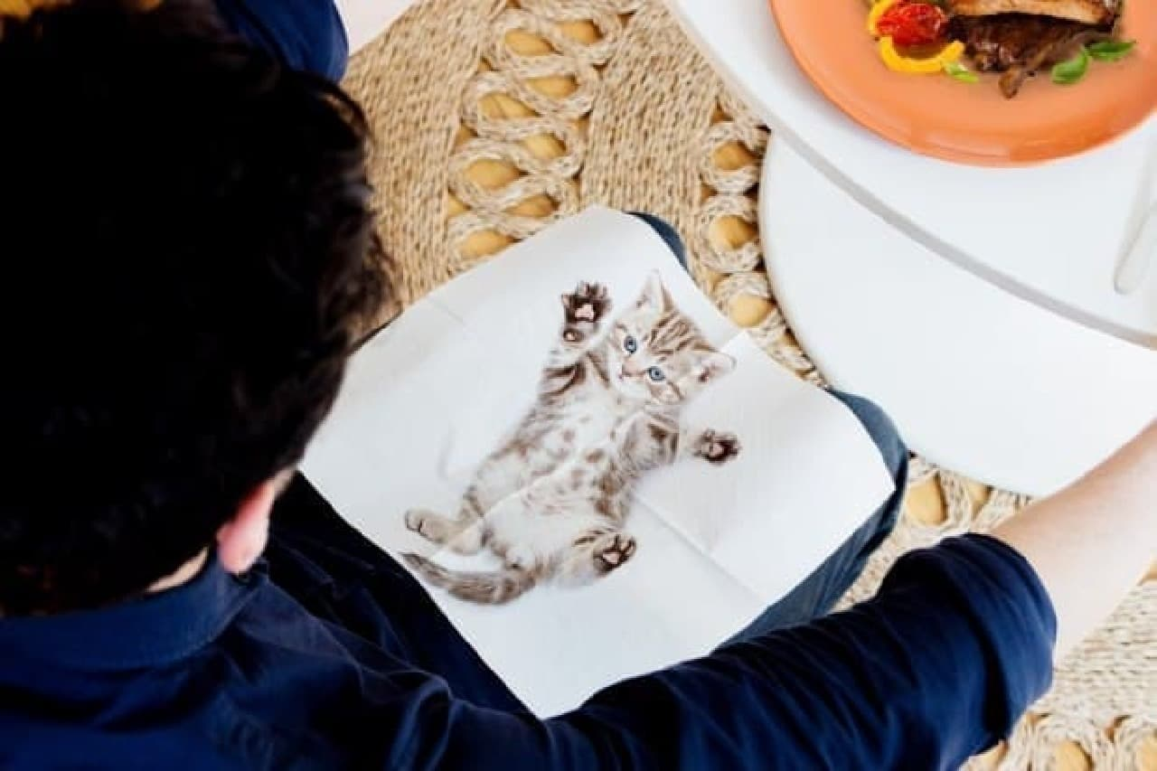 suck uk「CAT NAPKINS」