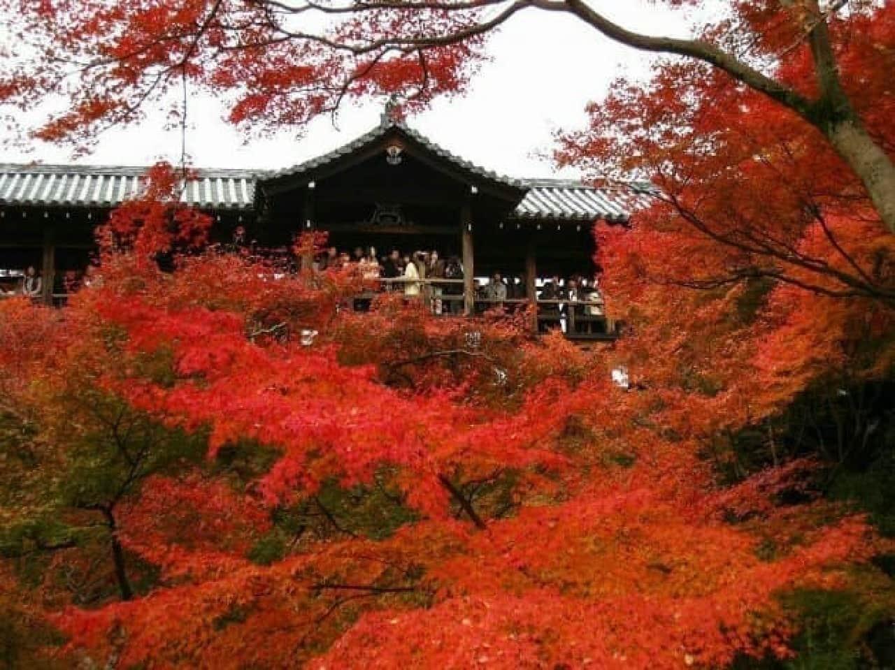 「東福寺」(京都府京都市)