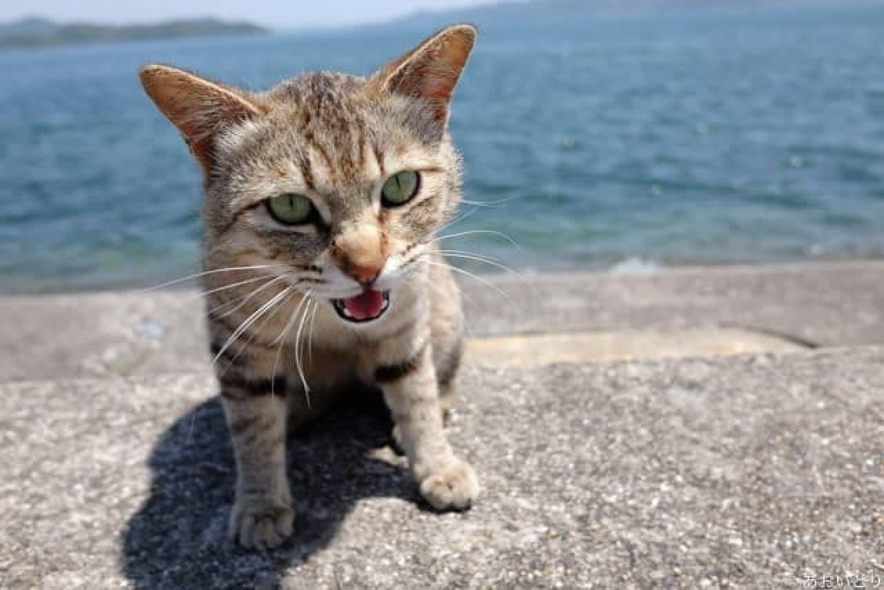 島ねこぽん』の「あおいとり」さんによる写真展「にゃんぽとれ」、本日開催!