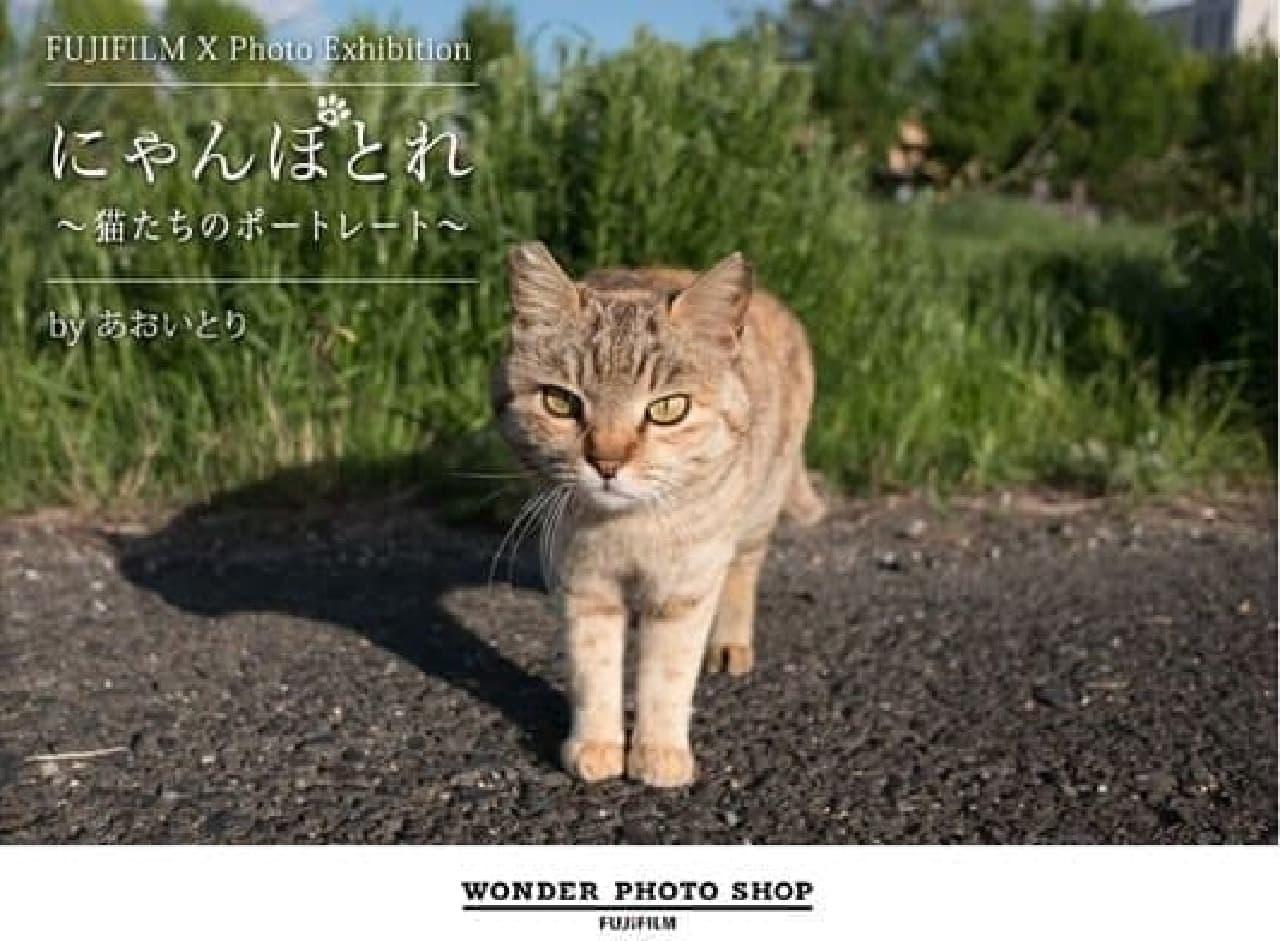 『島ねこぽん』の「あおいとり」さんによる写真展「にゃんぽとれ」、本日開催!