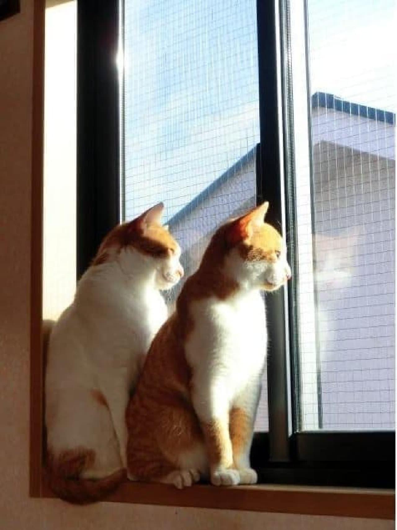 男のための、ネコの部屋「でざいにゃーずルーム」