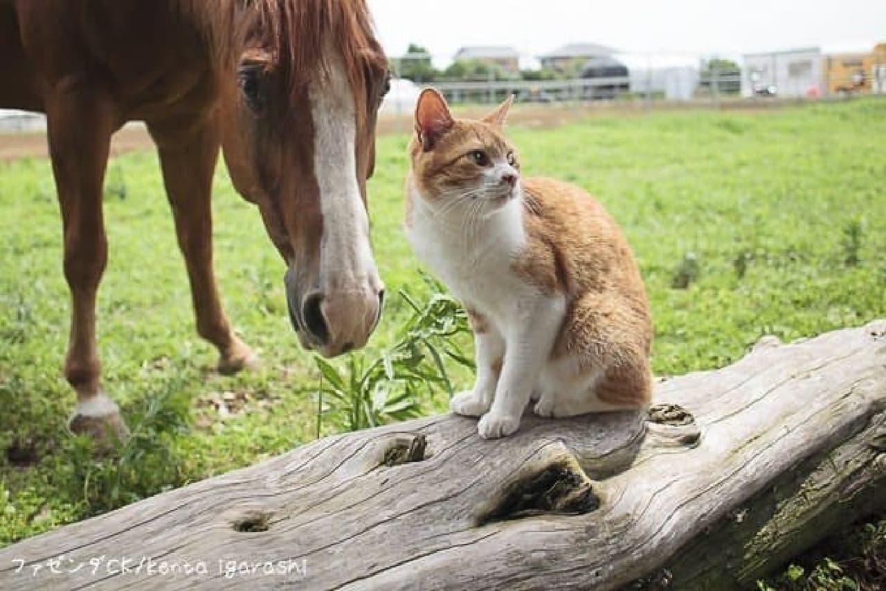 飛び猫』の五十嵐健太さんによる『猫とともだち カレンダーBOOK2017』
