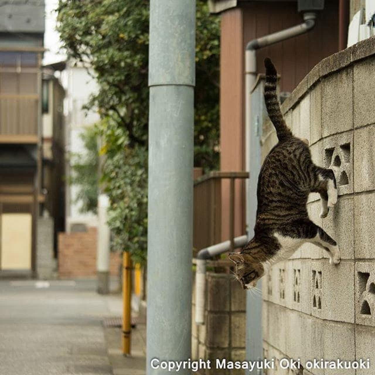 おきさんの撮影した無重力ネコ