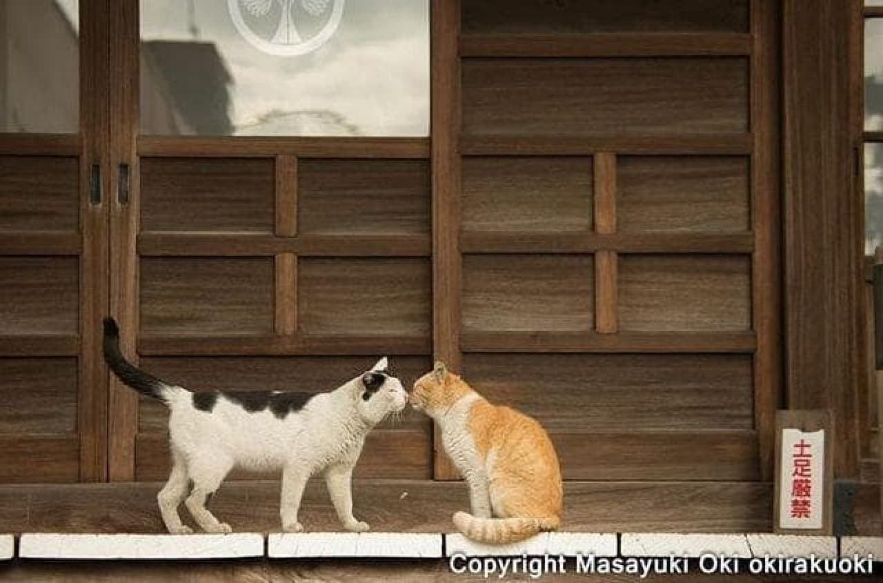「KISSネコ」まみれのカレンダー「KISS & LOVE猫 CALENDAR 2017」