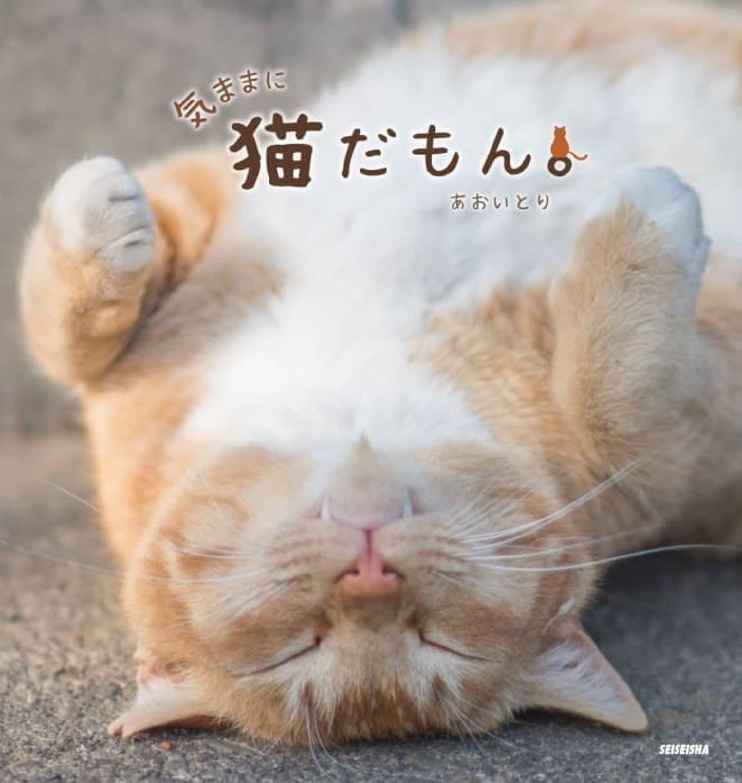 「あおいとり」さんによる最新写真集『気ままに猫だもん。』