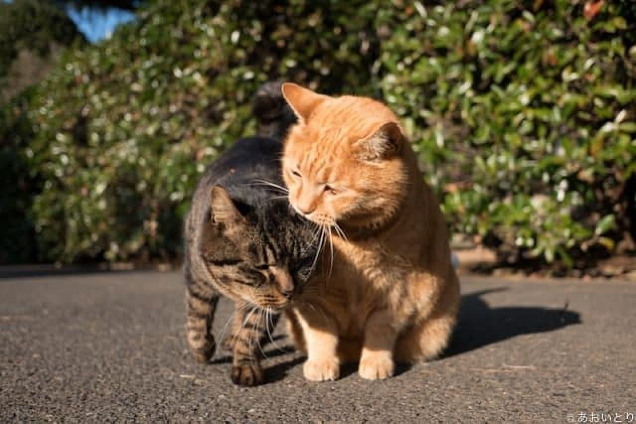 るあおいとりさんによる新作写真集『気ままに猫だもん。』