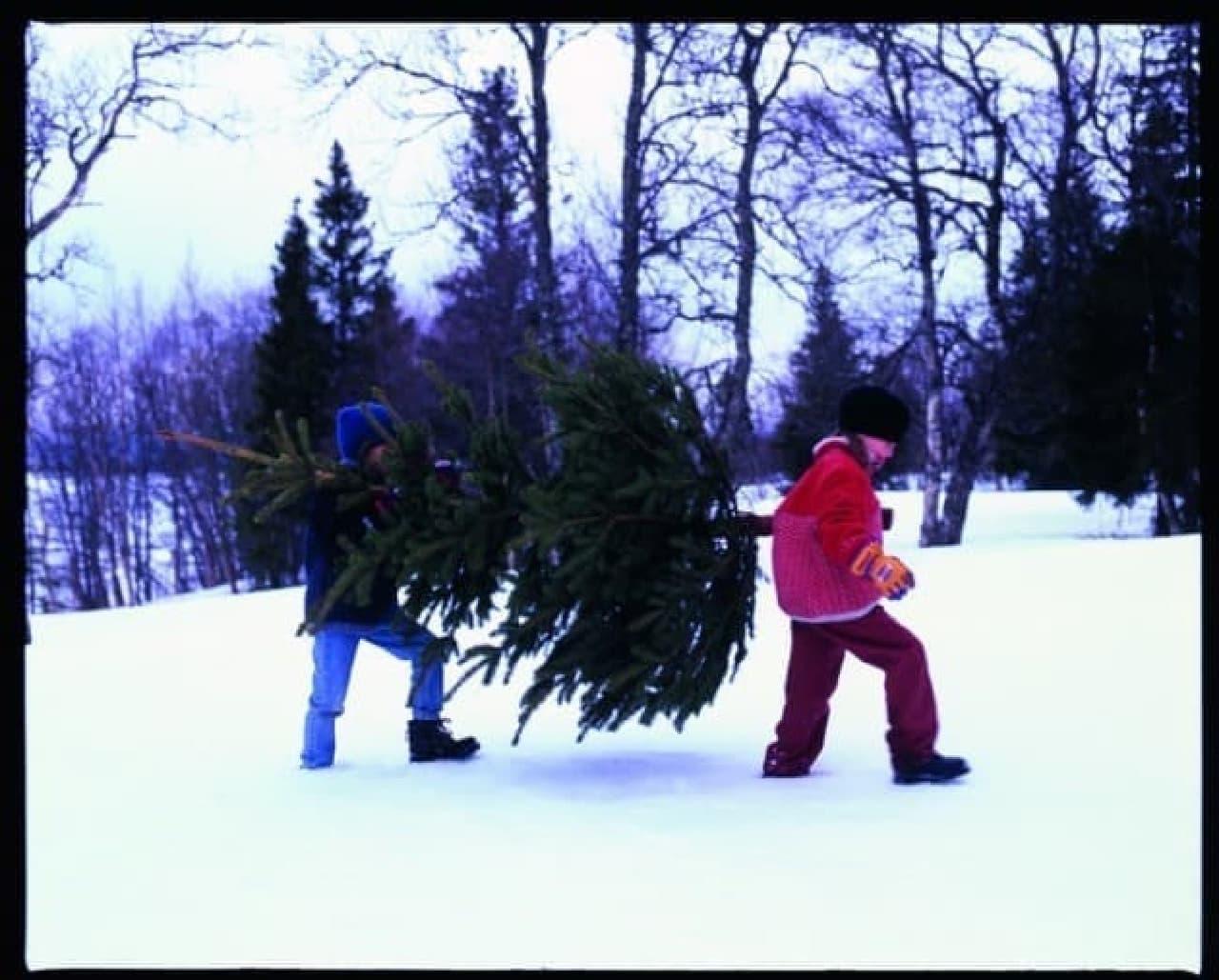 イケアストア「生木のクリスマスツリー」