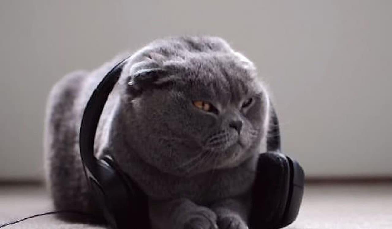 ネコがうっとりする音楽CD「ねこのための音楽 - Music For Cats」