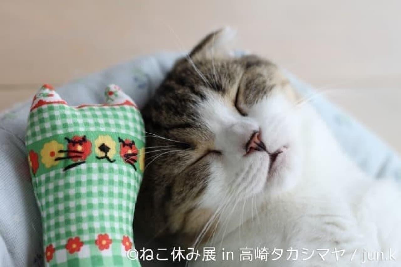 群馬だってネコまみれ…「ねこ休み展」巡回展が高崎タカシマヤで12月27日開催