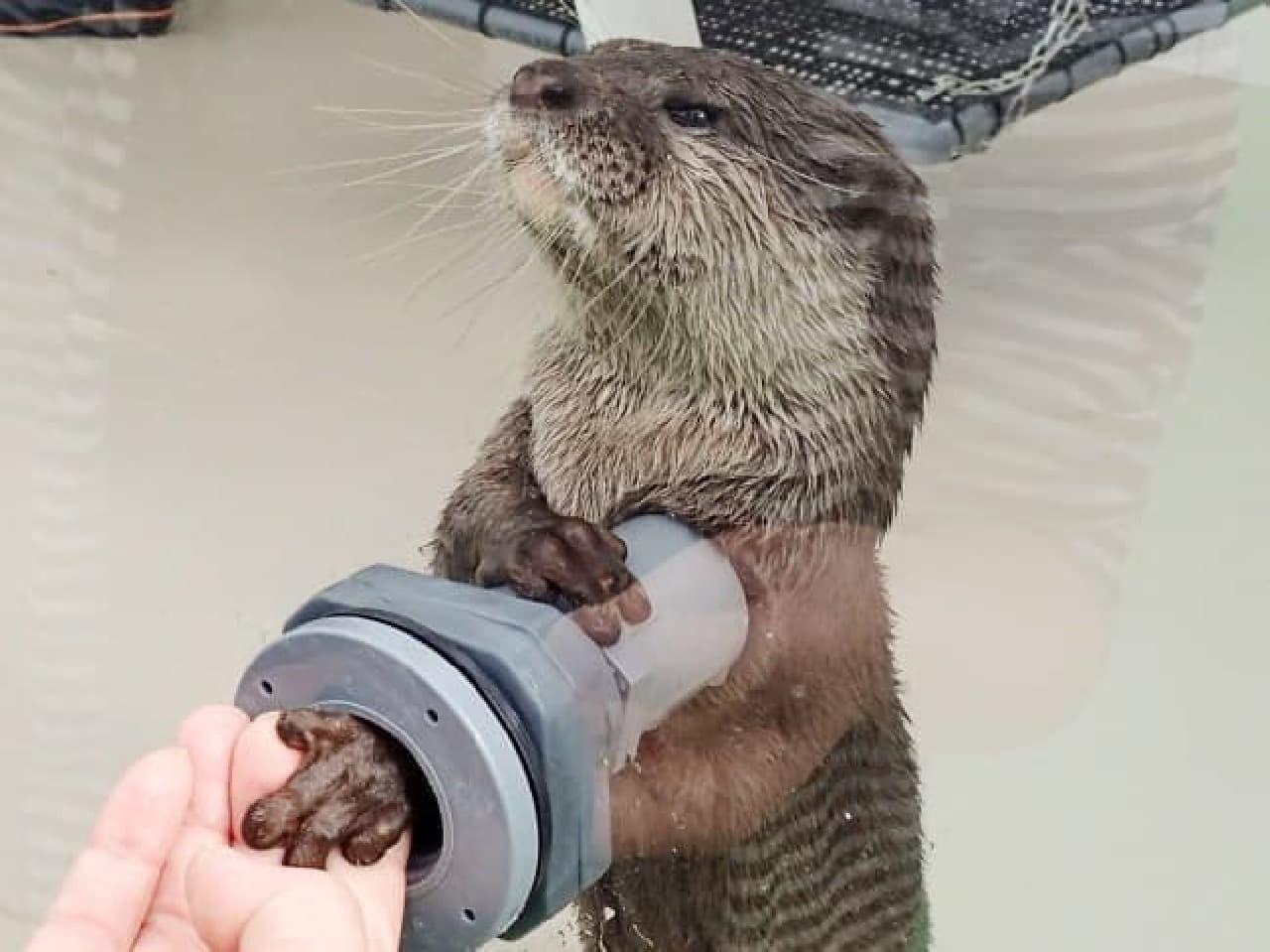 サンシャイン水族館「2017年オリジナル福袋」
