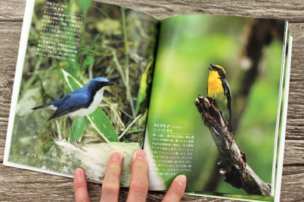 アスコム「聞くだけで極上の癒しCDブック心地よい鳥のさえずり」
