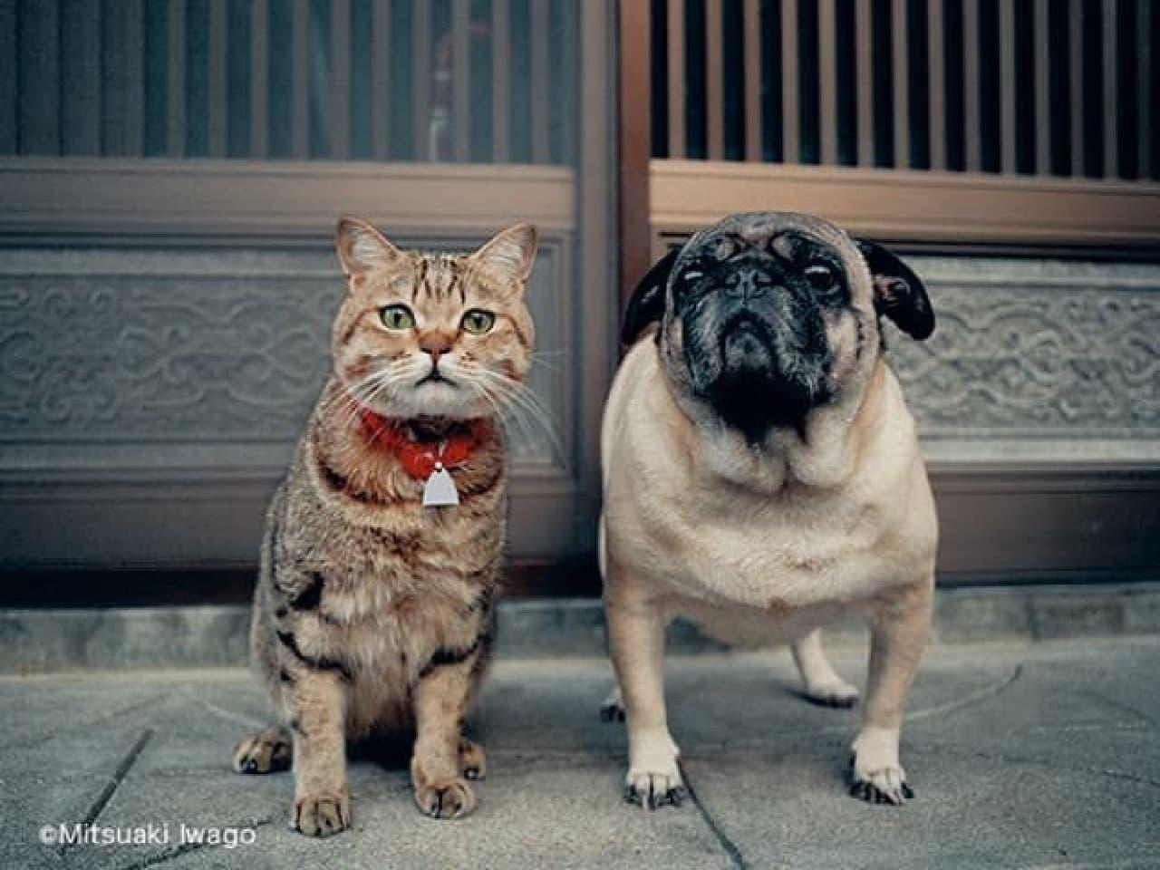岩合光昭氏の猫写真展