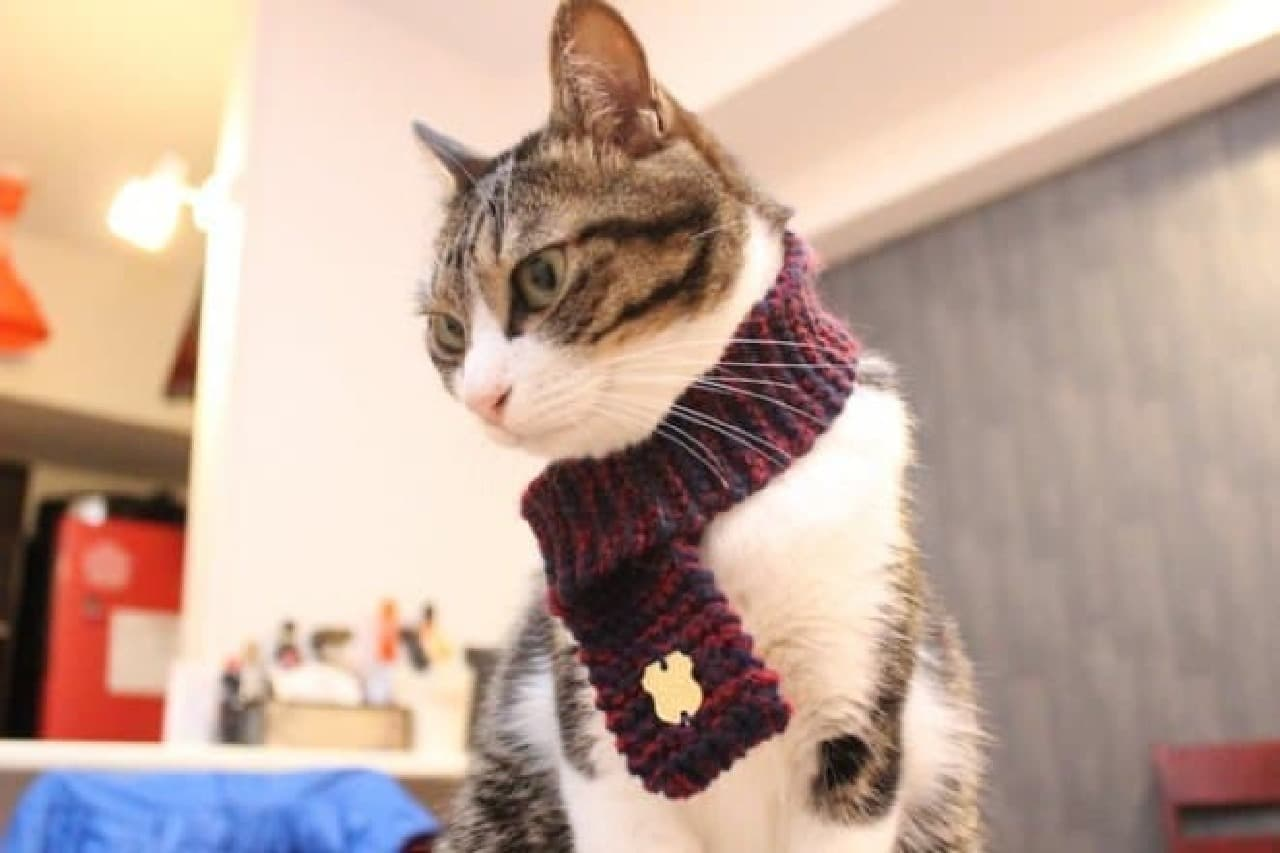 ネコ専用マフラー「necomuffler」