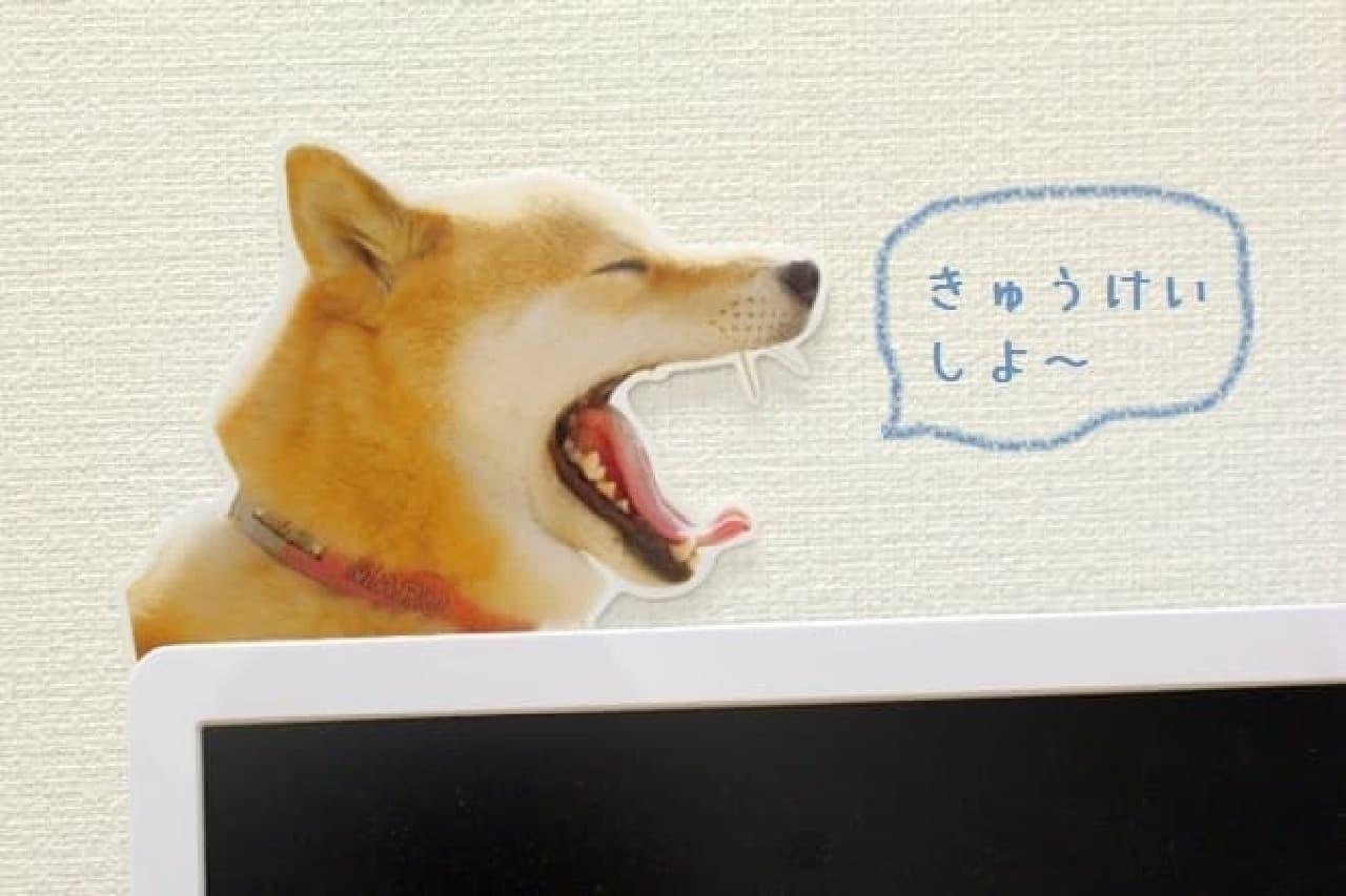 キャンドゥ×柴犬まる