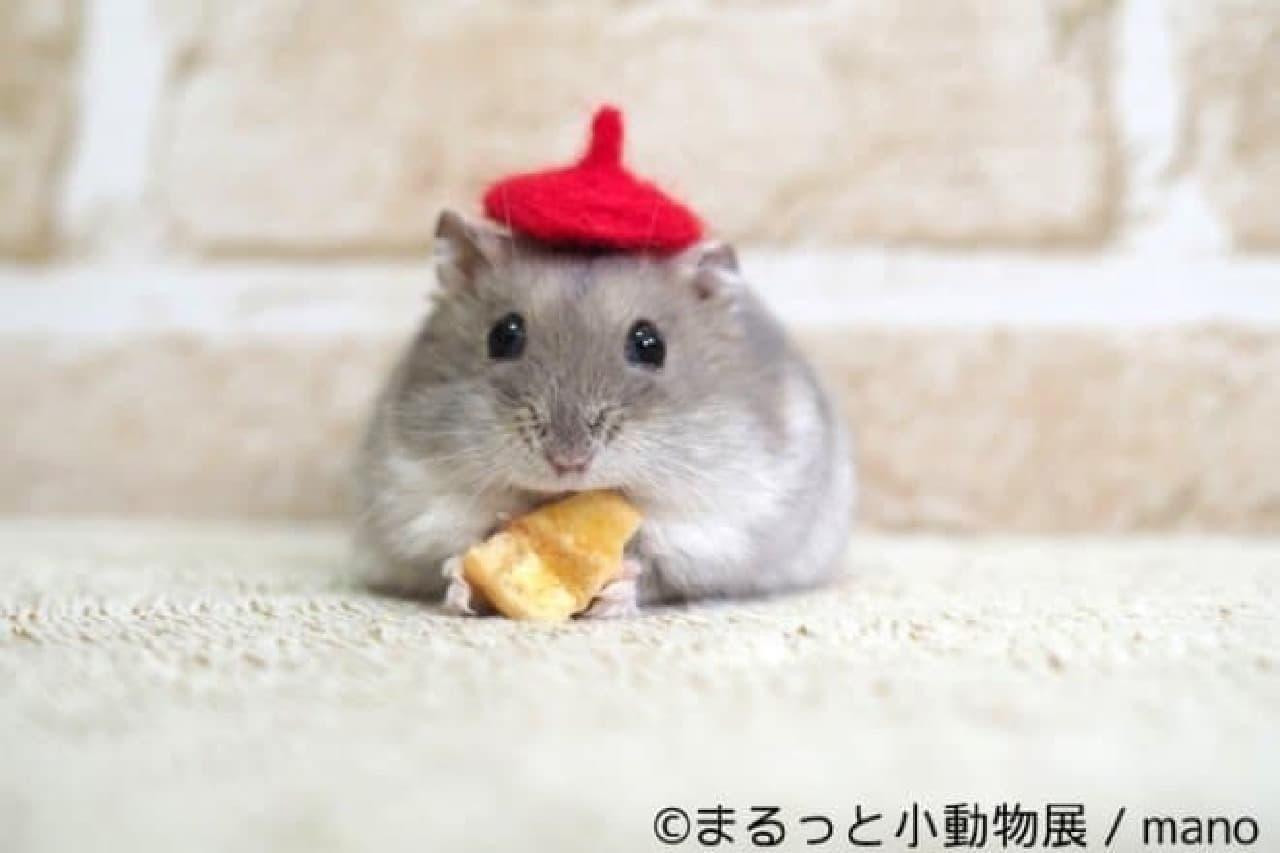 小動物をテーマにした写真展「まるっと小動物展」