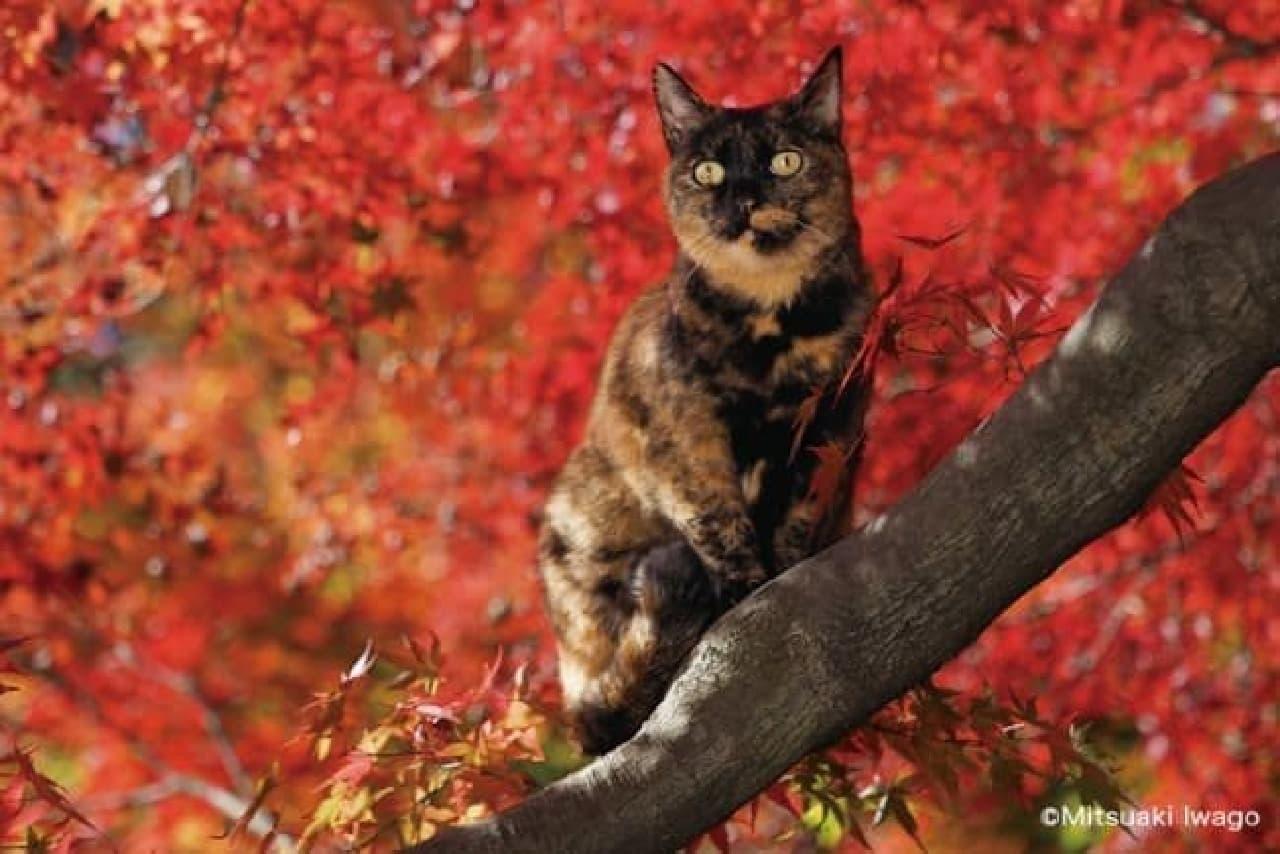 岩合光昭さん新作写真展「ねこの京都」