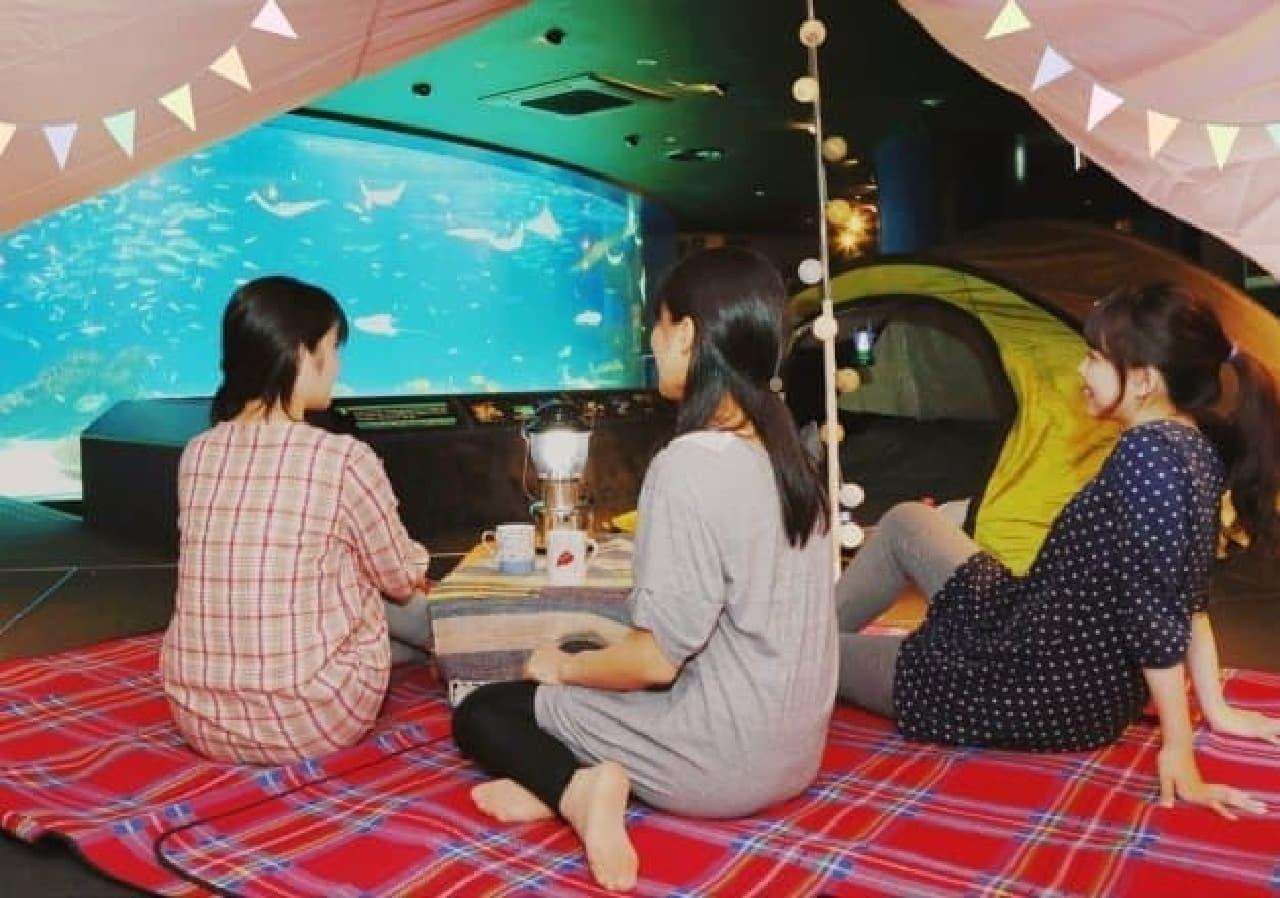 サンシャイン水族館「オトナ女子の夜ふかし水族館」
