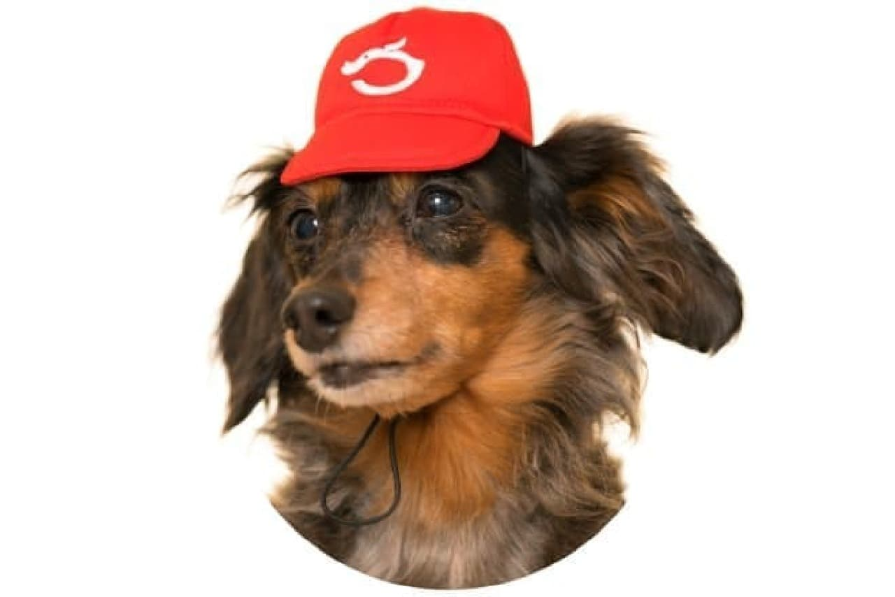 犬用かぶりもの「かわいい かわいい 犬の野球チーム」