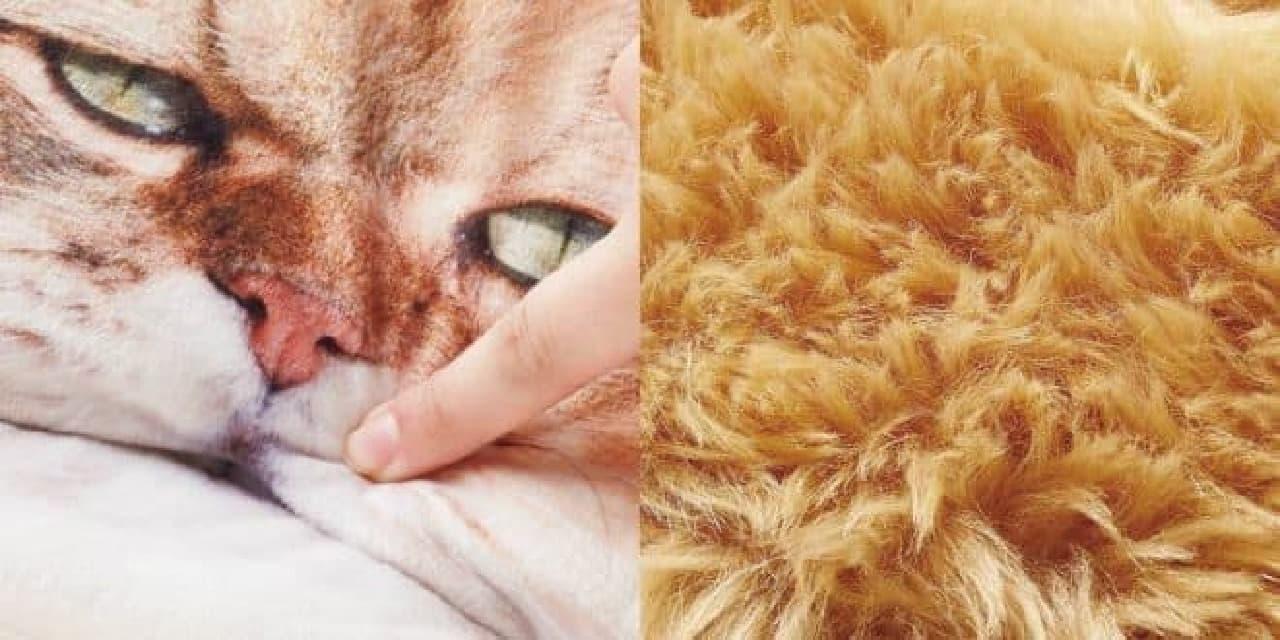 フェリシモ猫部×「ふーちゃん」ティッシュカバー