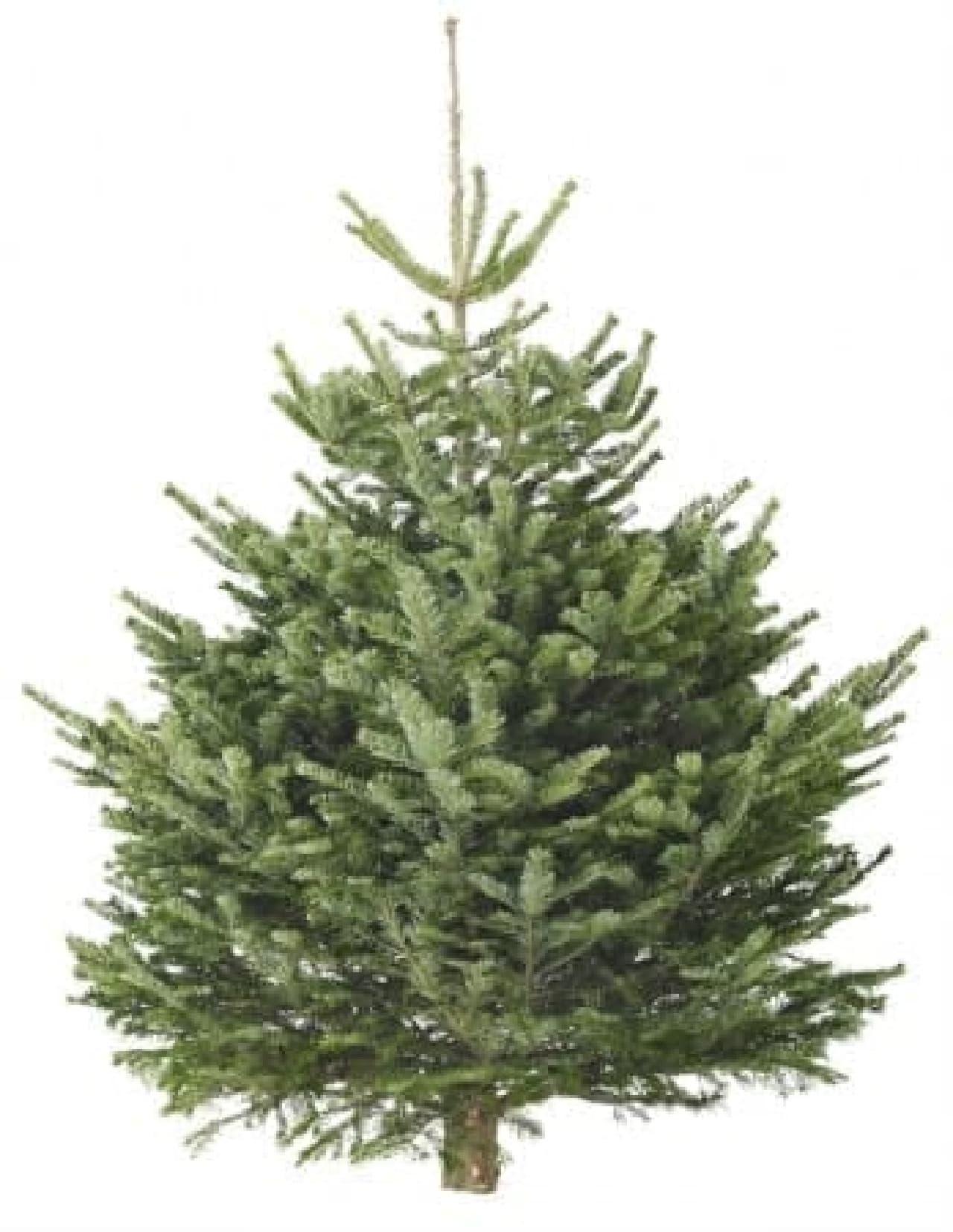 イケアに生木のクリスマスツリーやスウェーデン流クリスマスディナー「ユールボード」