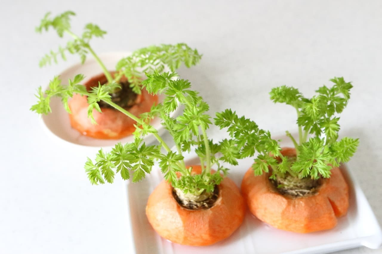 ズボラさんもできる家庭菜園!人参のヘタの水栽培