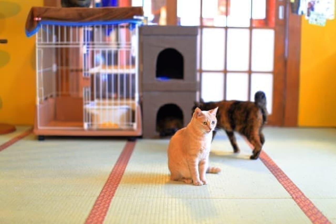 「ゆるネコ夏マスク COOLIST CAT MASK」がネコリパブリックから -- ロシアンブルーと白猫のデザイン