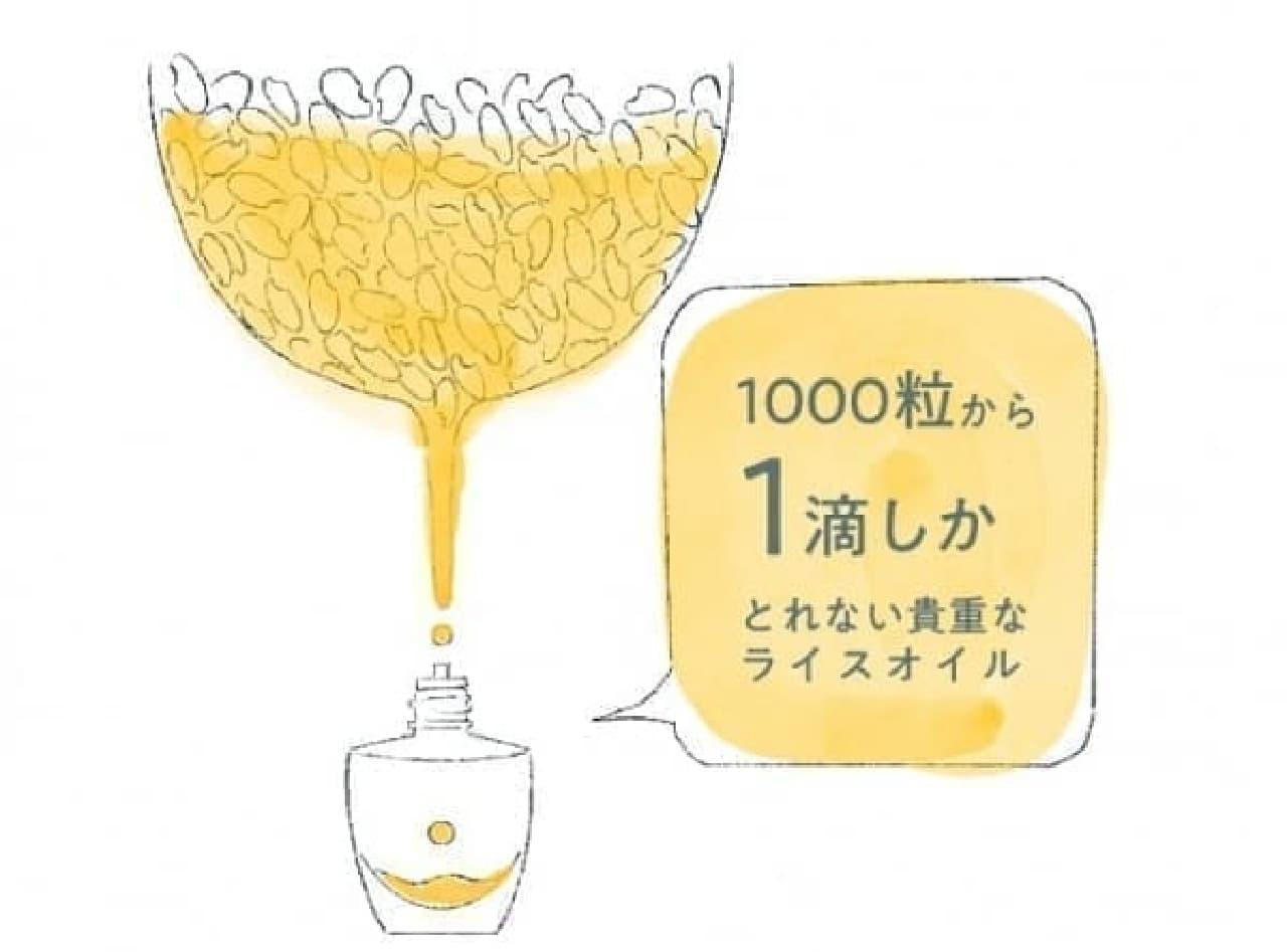 米ぬかと米胚芽から抽出されるライスオイル