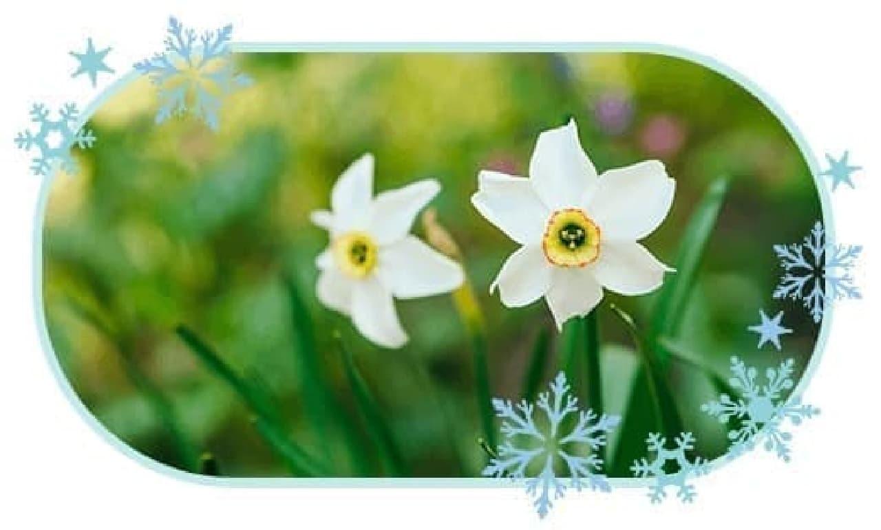 雪の中でも咲く雪中花