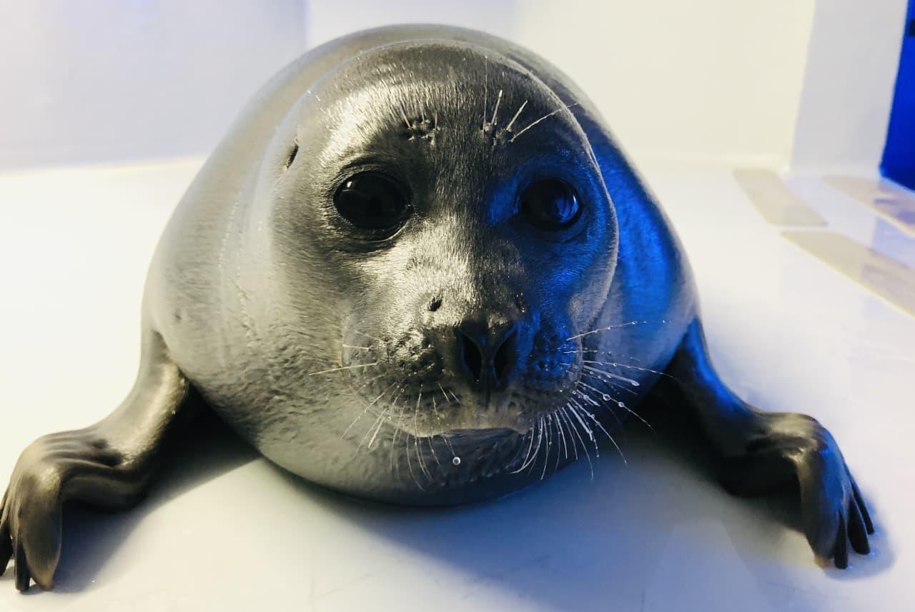 サンシャイン水族館2021年オリジナル福袋