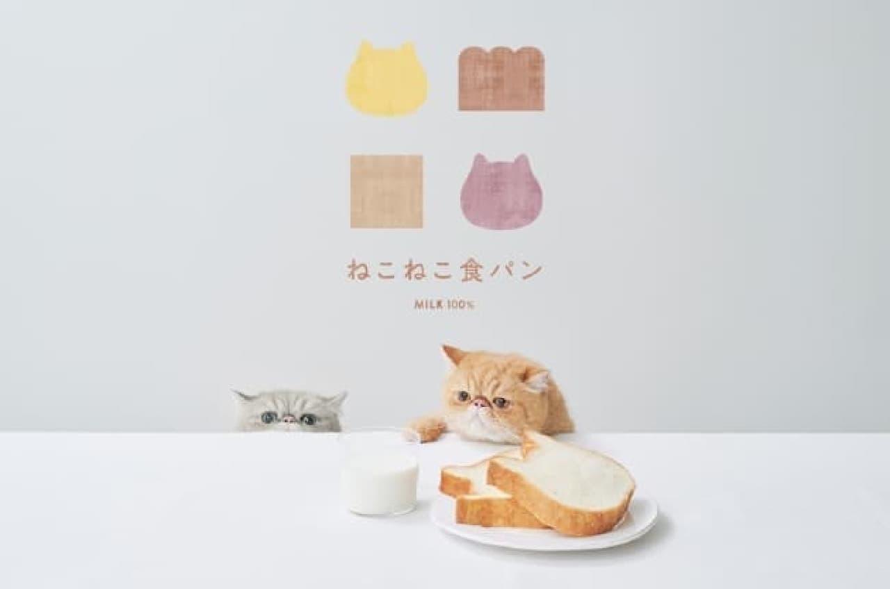 「ねこねこ食パン」の福袋