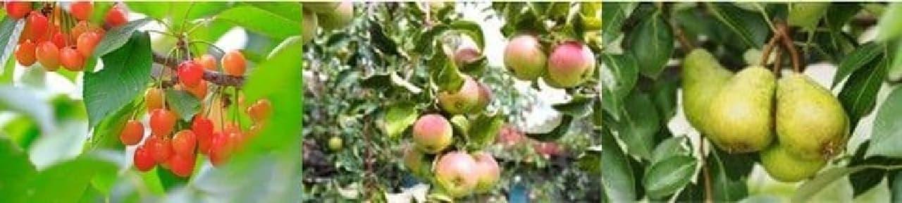 さくらんぼ、りんご、ラ・フランス